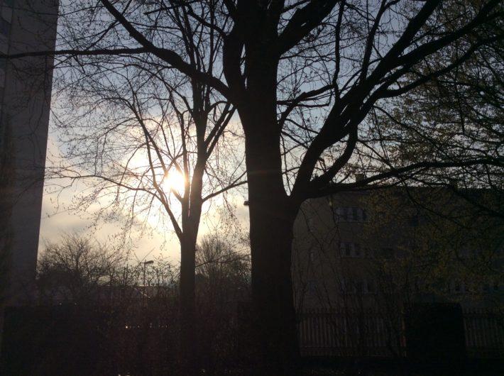 Bäume IGS Goethe